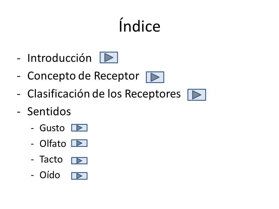 Índice -Introducción -Concepto de Receptor -Clasificación de los Receptores -Sentidos -Gusto -Olfato -Tacto -Oído