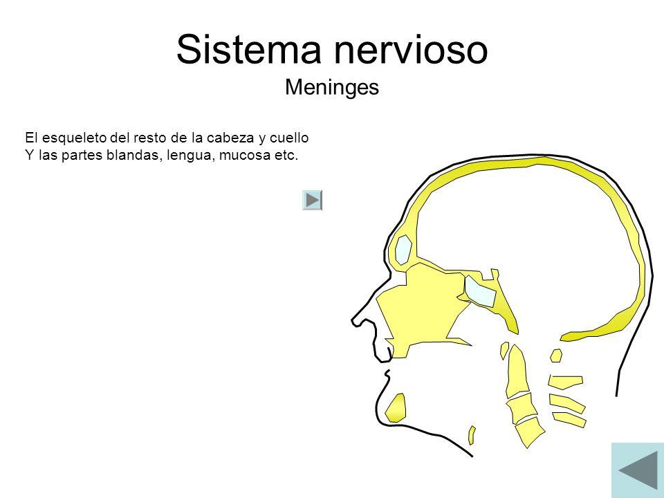 Sistema nervioso Meninges El esqueleto del resto de la cabeza y cuello Y las partes blandas, lengua, mucosa etc.