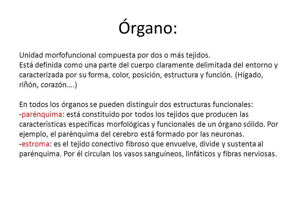 Órgano: Unidad morfofuncional compuesta por dos o más tejidos. Está definida como una parte del cuerpo claramente delimitada del entorno y caracteriza