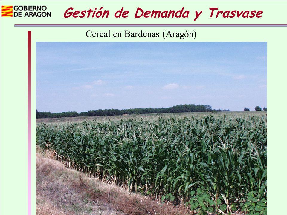 Gestión de Demanda y Trasvase Cereal en Bardenas (Aragón)