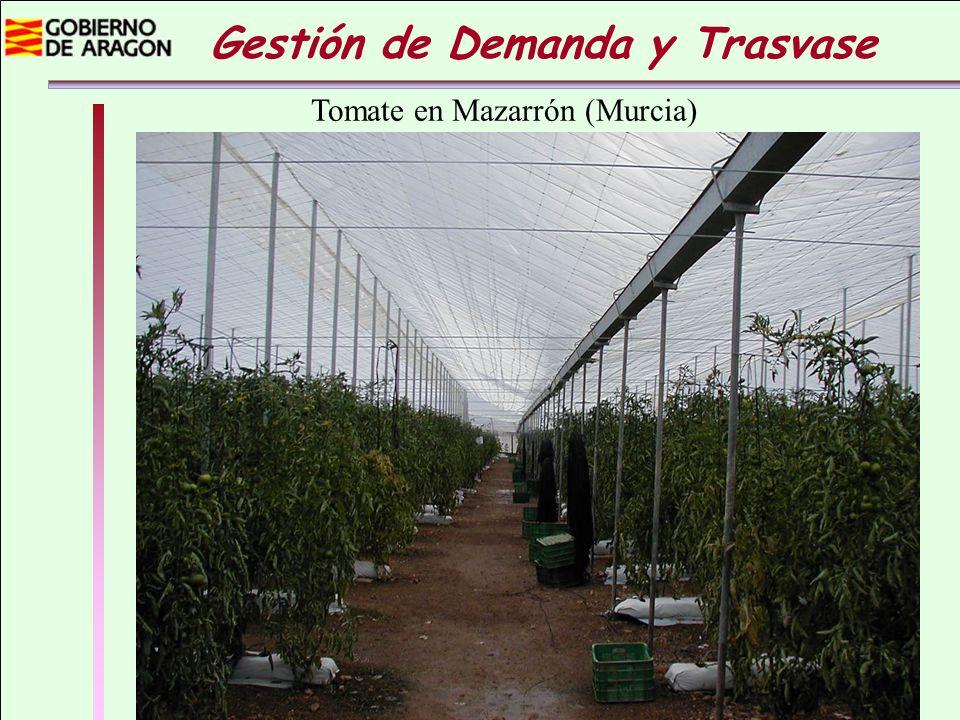 Gestión de Demanda y Trasvase Las frutas y hortalizas son cultivos de elevada rentabilidad económica y una parte importante de la producción se concentra en el sureste donde hay una grave sobreexplotación de recursos hídricos.