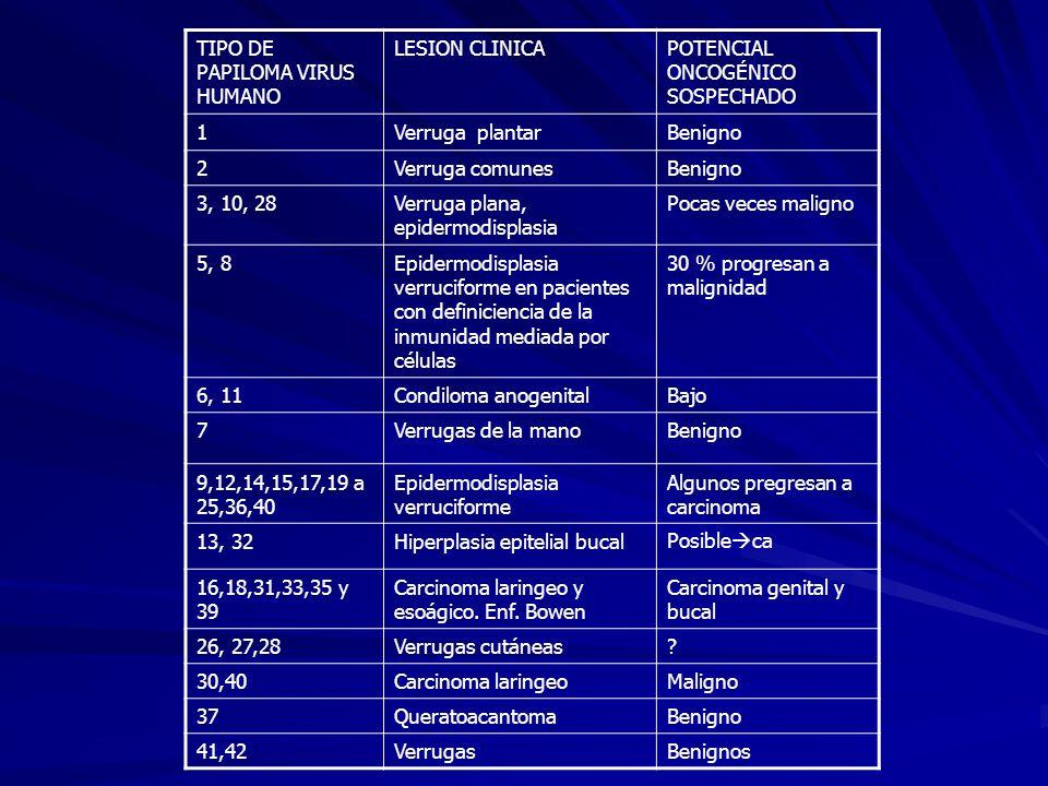 TIPO DE PAPILOMA VIRUS HUMANO LESION CLINICAPOTENCIAL ONCOGÉNICO SOSPECHADO 1Verruga plantarBenigno 2Verruga comunesBenigno 3, 10, 28Verruga plana, ep