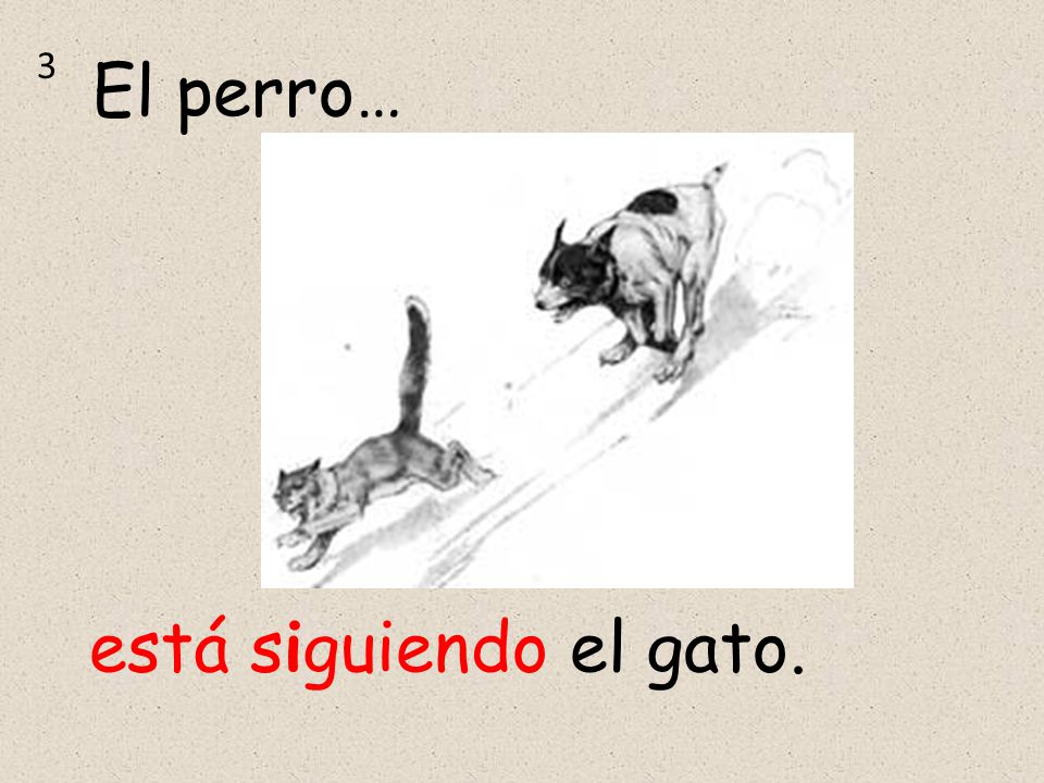 está siguiendo el gato. El perro… 3
