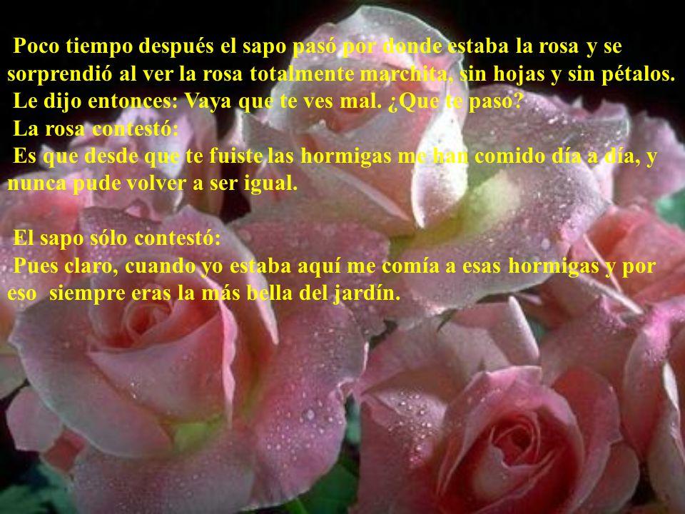 Poco tiempo después el sapo pasó por donde estaba la rosa y se sorprendió al ver la rosa totalmente marchita, sin hojas y sin pétalos. Le dijo entonce