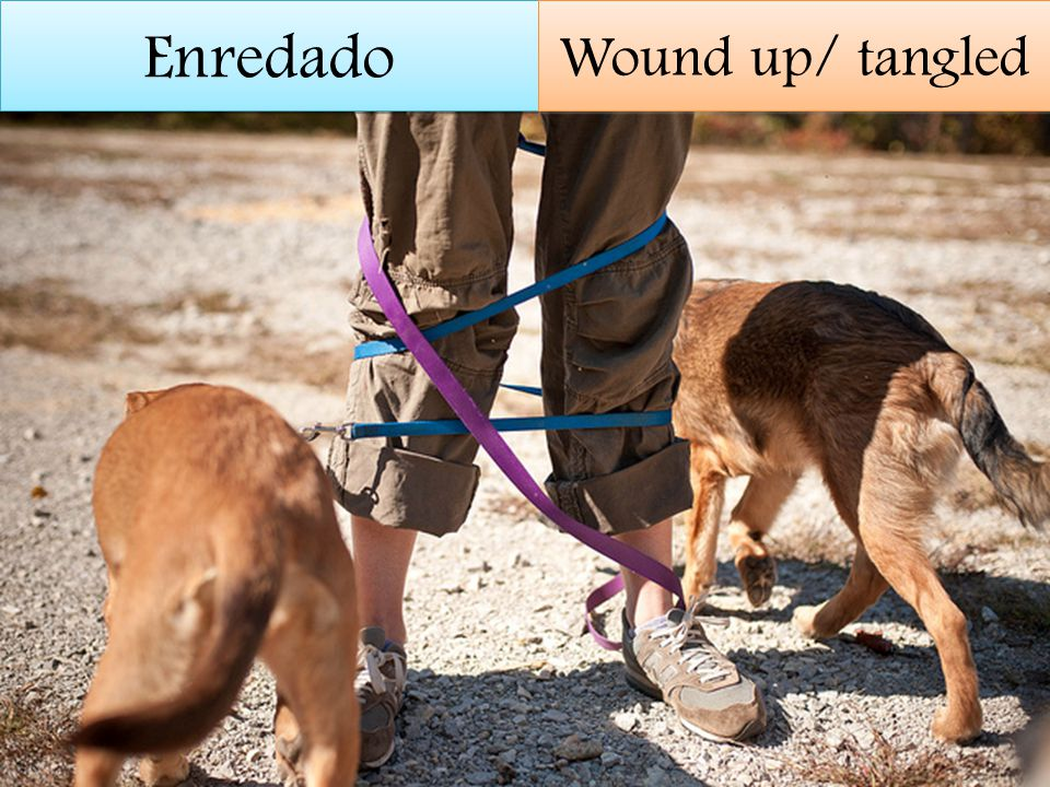 Enredado Wound up/ tangled