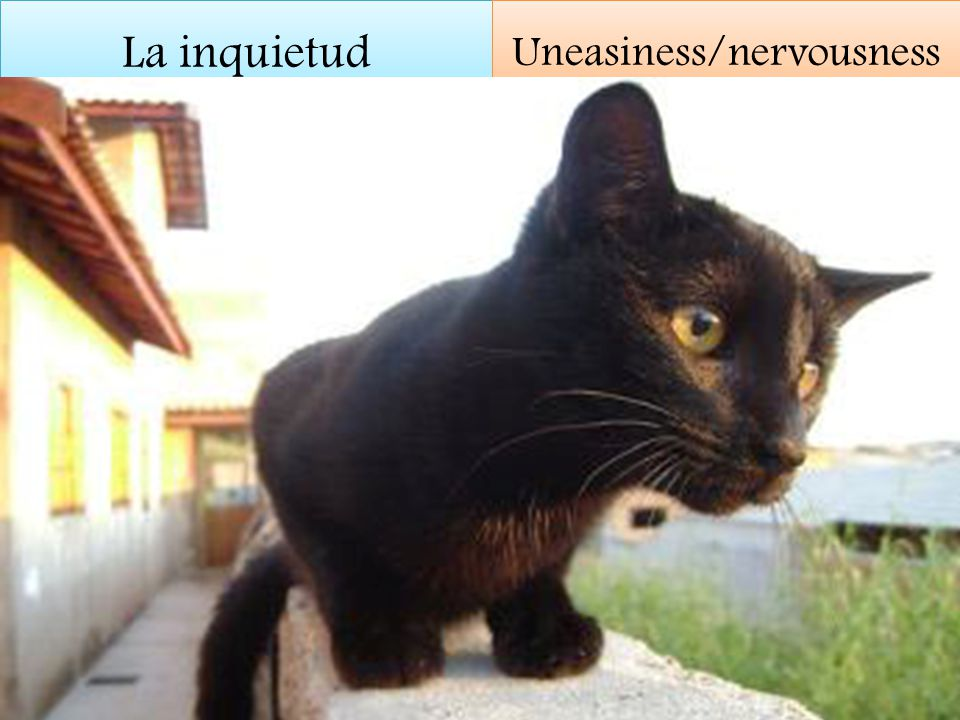 La inquietud Uneasiness/nervousness