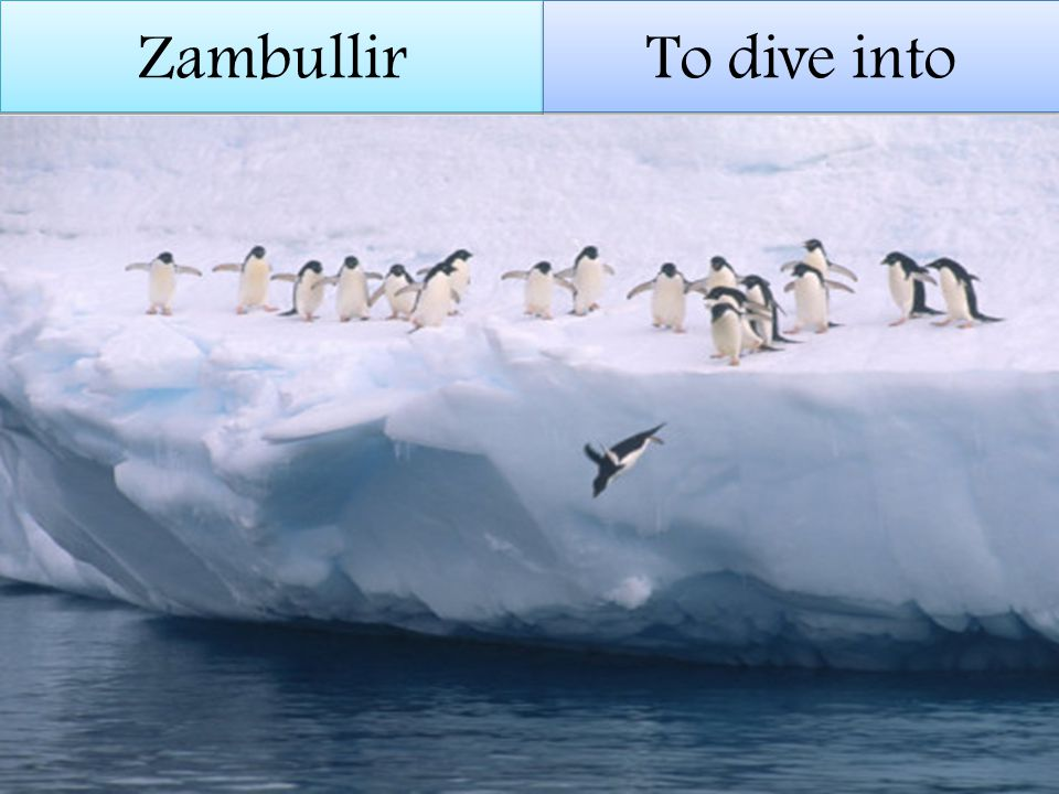 Zambullir To dive into