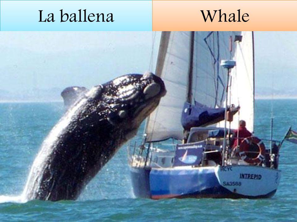 La ballena Whale
