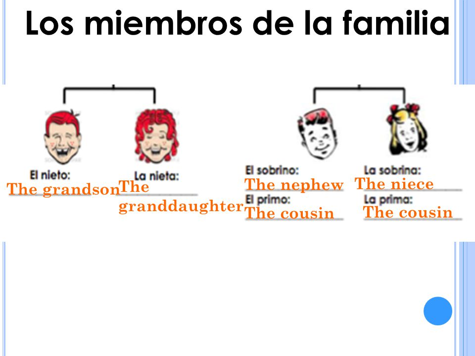 The grandson Los miembros de la familia The granddaughter The nephew The niece The cousin