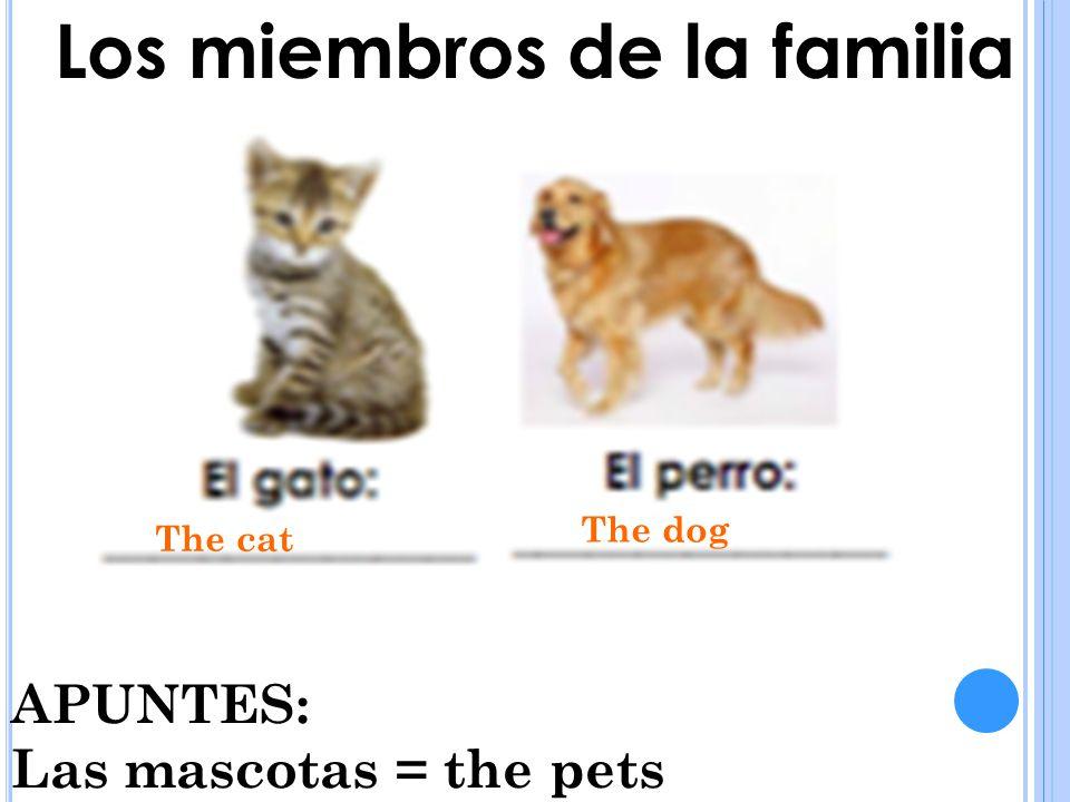 Los miembros de la familia The cat The dog APUNTES: Las mascotas = the pets