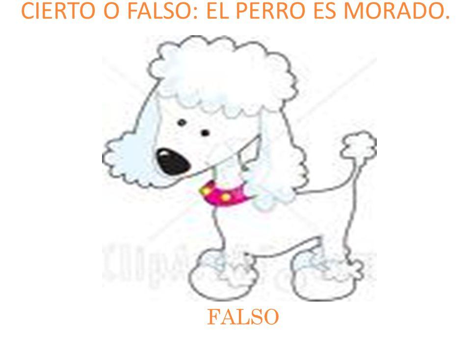 CIERTO O FALSO: EL PERRO ES MORADO. FALSO