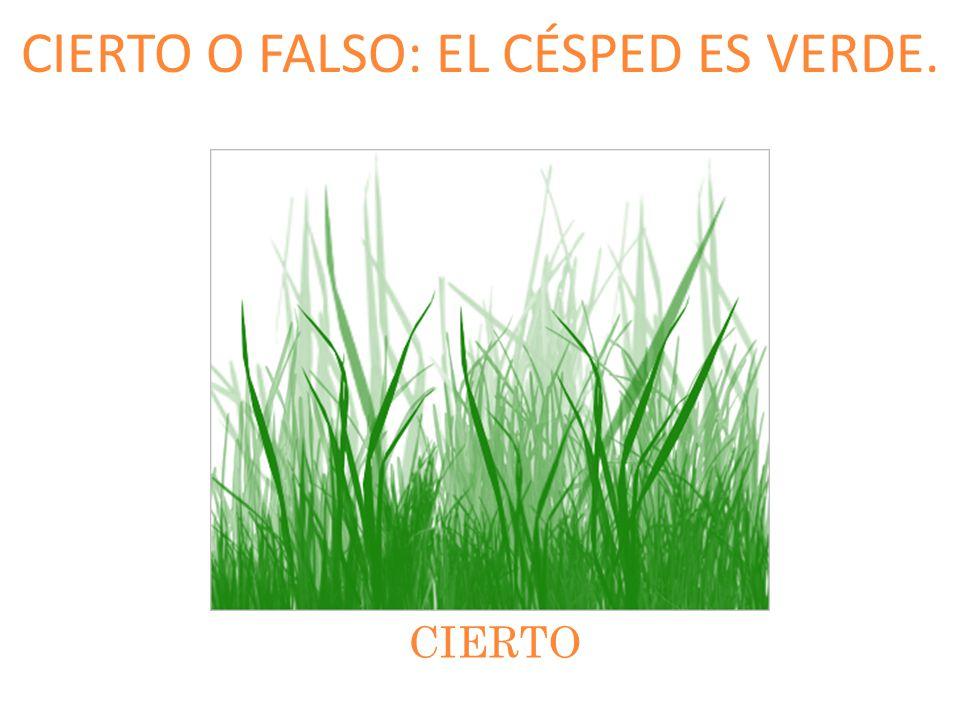 CIERTO O FALSO: EL CÉSPED ES VERDE. CIERTO