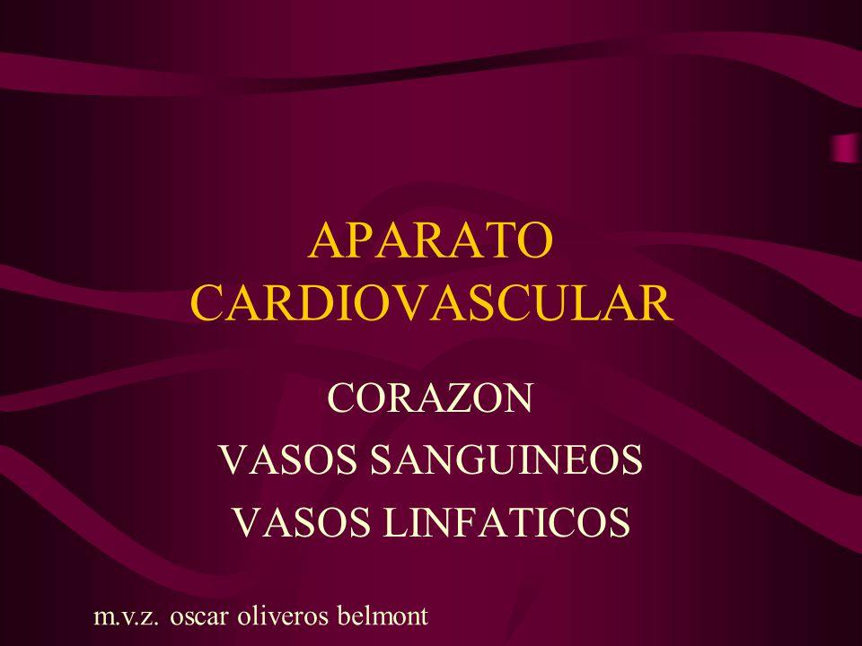 APARATO CARDIOVASCULAR CORAZON VASOS SANGUINEOS ARTERIAS VENAS VASOS LINFATICOS m.v.z.