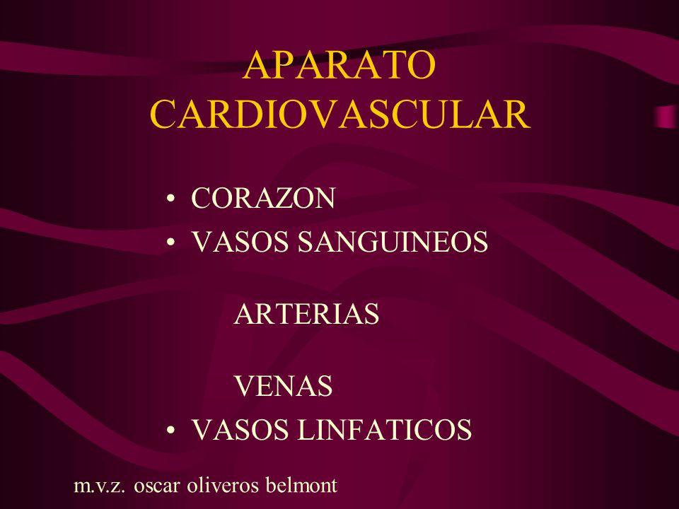APARATO CARDIOVASCULAR VENAS: En venas medianas de miembros torácicos y pélvicos se forman pliegues de la túnica intima formando válvulas que permiten que la sangre avance y se denominan VALVAS.