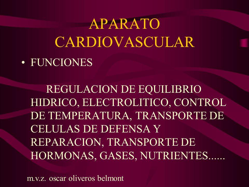 APARATO CARDIOVASCULAR VENAS: La red capilar donde se lleva a cabo el intercambio con los componentes tisulares de los órganos se comunican con las vénulas o venas de pequeño calibre.