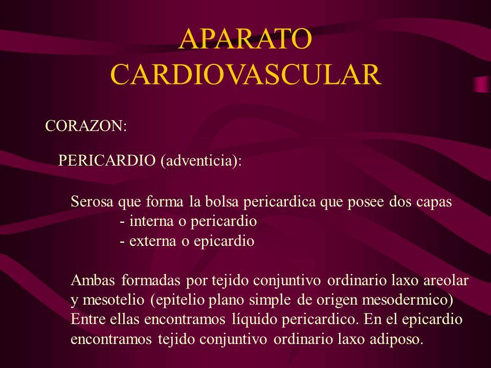 APARATO CARDIOVASCULAR ARTERIAS –Llevan la sangre en circulación centrifuga al corazón.