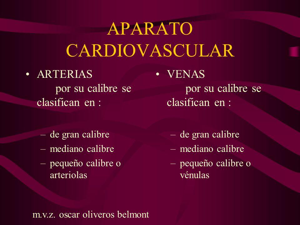 APARATO CARDIOVASCULAR ARTERIAS: Contiene las capas generales de un vaso sanguíneo INTIMA: Lámina endotelial (epitelio de revestimiento simple plano y membrana basal.