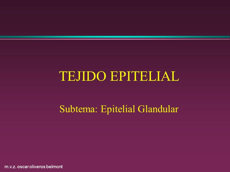 m.v.z. oscar oliveros belmont TEJIDO EPITELIAL Subtema: Epitelial Glandular
