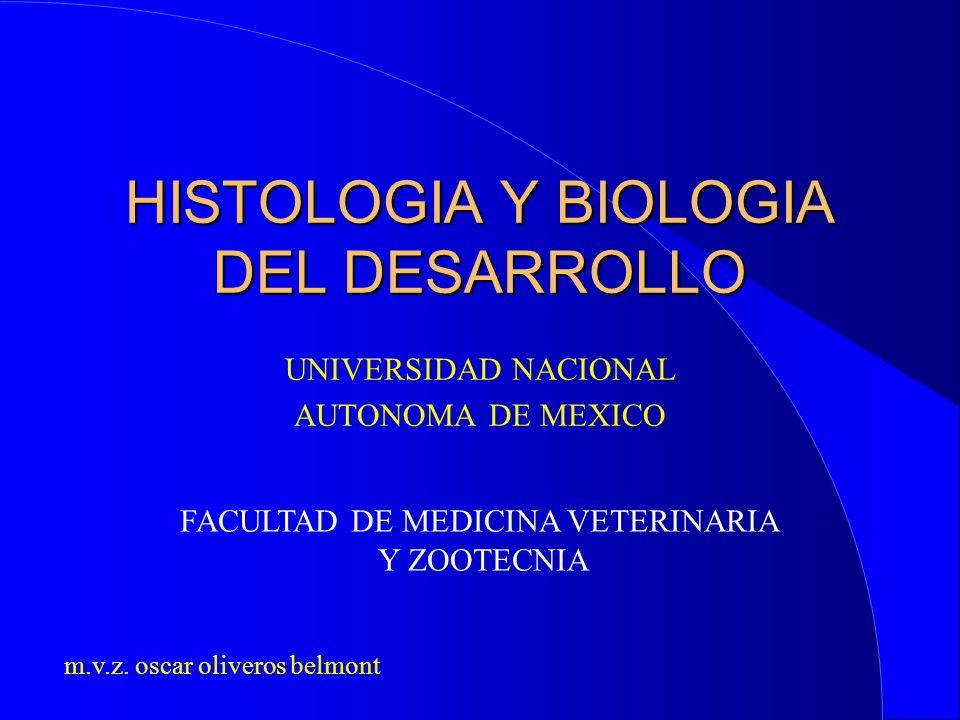 m.v.z. oscar oliveros belmont HISTOLOGIA Y BIOLOGIA DEL DESARROLLO UNIVERSIDAD NACIONAL AUTONOMA DE MEXICO FACULTAD DE MEDICINA VETERINARIA Y ZOOTECNI