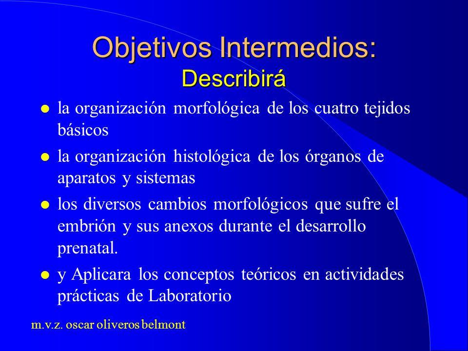m.v.z. oscar oliveros belmont Objetivos Intermedios: Describirá l la organización morfológica de los cuatro tejidos básicos l la organización histológ