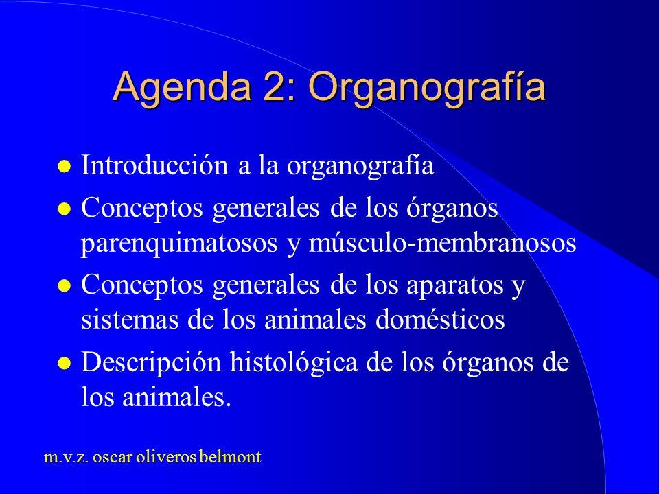 m.v.z. oscar oliveros belmont Agenda 2: Organografía l Introducción a la organografía l Conceptos generales de los órganos parenquimatosos y músculo-m