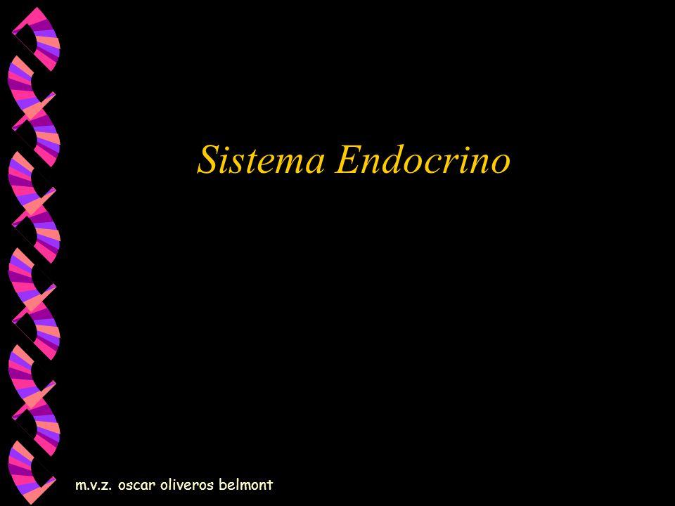 m.v.z. oscar oliveros belmont Sistema Endocrino