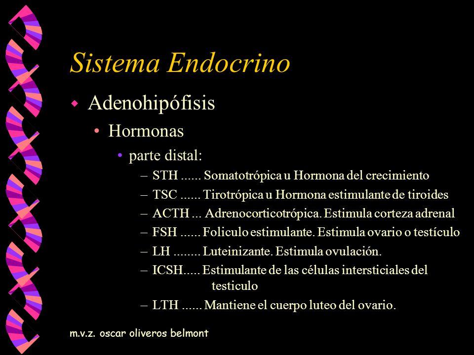 m.v.z. oscar oliveros belmont Sistema Endocrino w Adenohipófisis Hormonas parte distal: –STH...... Somatotrópica u Hormona del crecimiento –TSC......