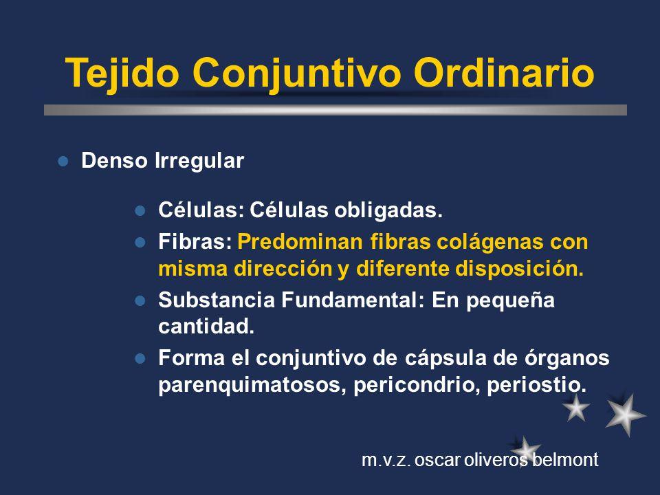 Tejido Conjuntivo Ordinario Denso Irregular Células: Células obligadas. Fibras: Predominan fibras colágenas con misma dirección y diferente disposició