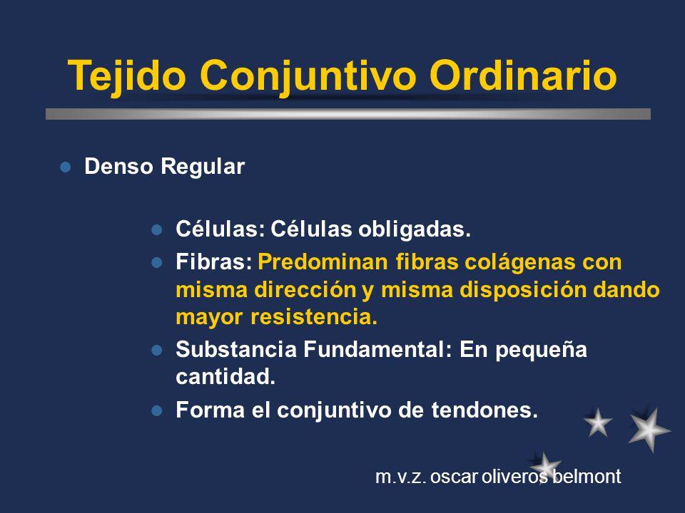 Tejido Conjuntivo Ordinario Denso Regular Células: Células obligadas. Fibras: Predominan fibras colágenas con misma dirección y misma disposición dand