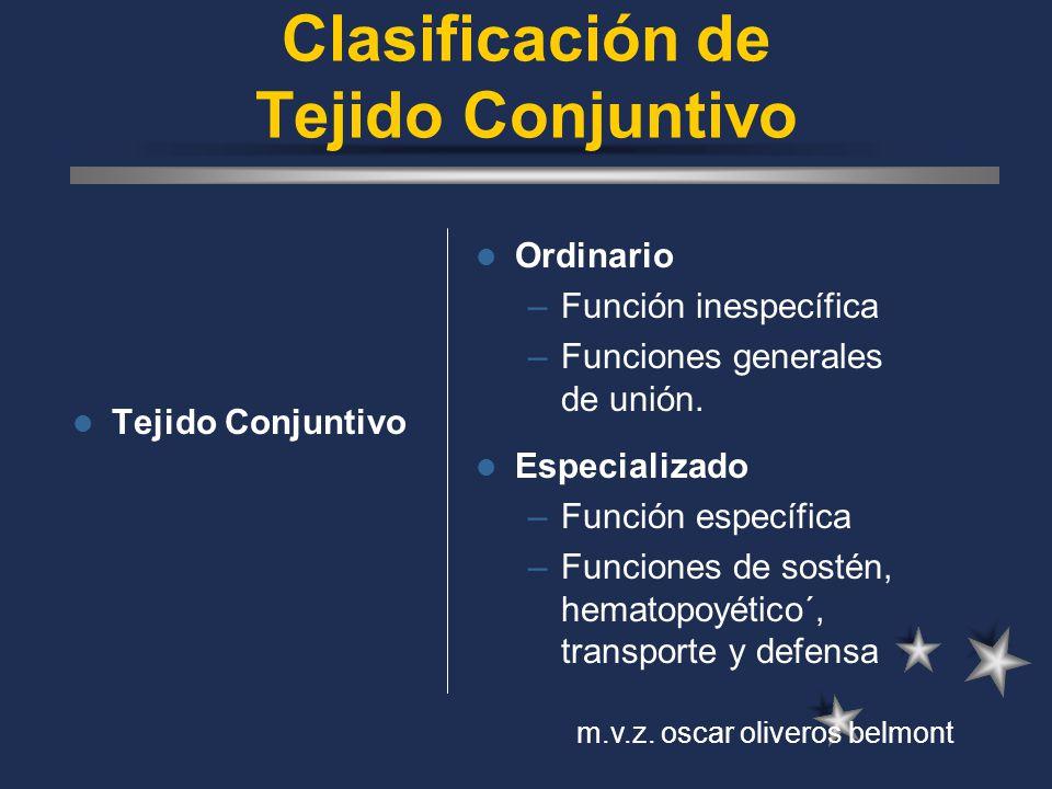 Clasificación de Tejido Conjuntivo Tejido Conjuntivo Ordinario –Función inespecífica –Funciones generales de unión. Especializado –Función específica