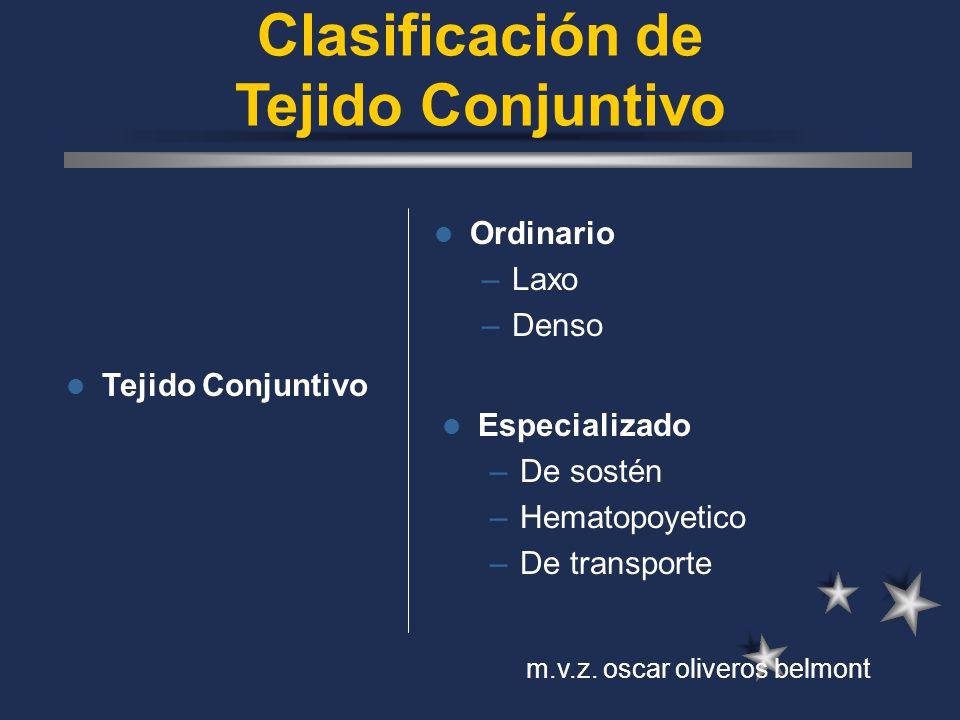 Clasificación de Tejido Conjuntivo Tejido Conjuntivo Ordinario –Laxo –Denso Especializado –De sostén –Hematopoyetico –De transporte m.v.z. oscar olive