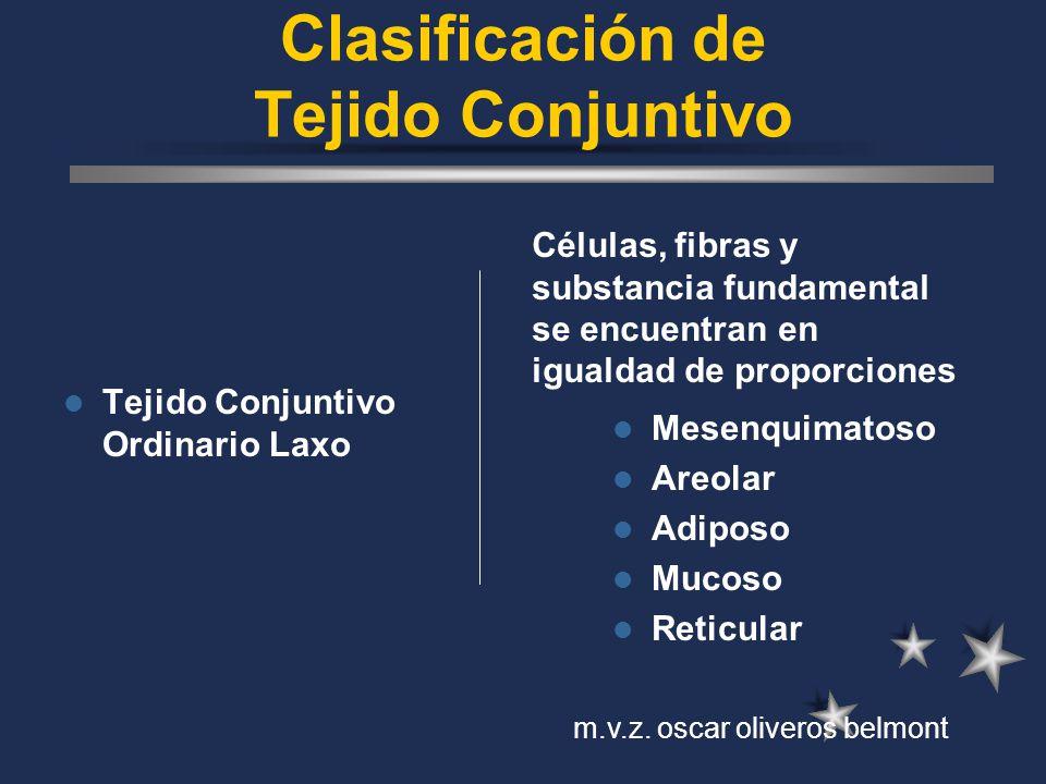 Clasificación de Tejido Conjuntivo Tejido Conjuntivo Ordinario Laxo Mesenquimatoso Areolar Adiposo Mucoso Reticular Células, fibras y substancia funda