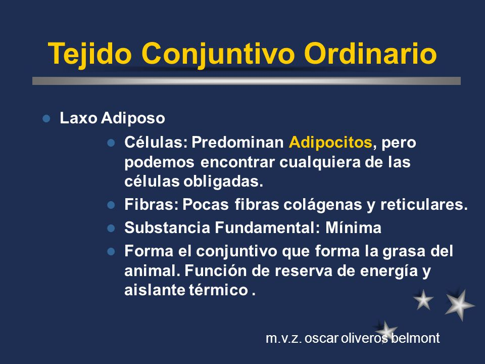 Tejido Conjuntivo Ordinario Laxo Adiposo Células: Predominan Adipocitos, pero podemos encontrar cualquiera de las células obligadas. Fibras: Pocas fib