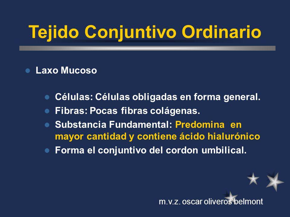 Tejido Conjuntivo Ordinario Laxo Mucoso Células: Células obligadas en forma general. Fibras: Pocas fibras colágenas. Substancia Fundamental: Predomina
