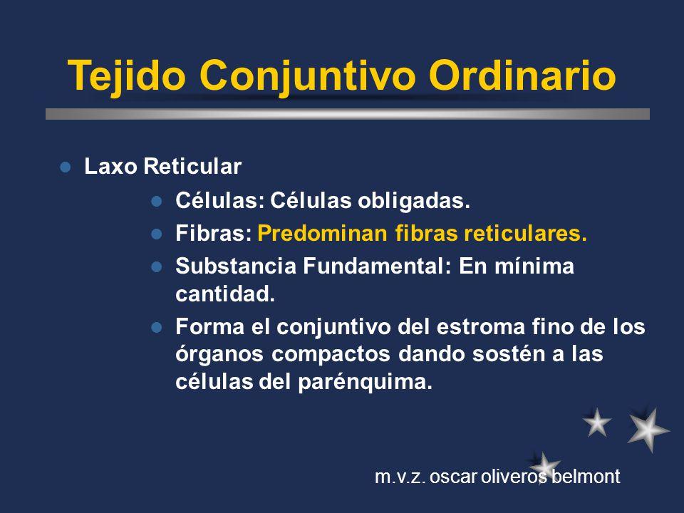 Tejido Conjuntivo Ordinario Laxo Reticular Células: Células obligadas. Fibras: Predominan fibras reticulares. Substancia Fundamental: En mínima cantid