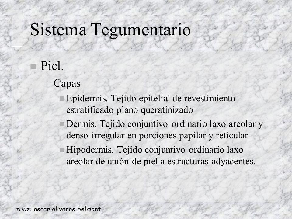 m.v.z.oscar oliveros belmont Sistema Tegumentario n Piel.
