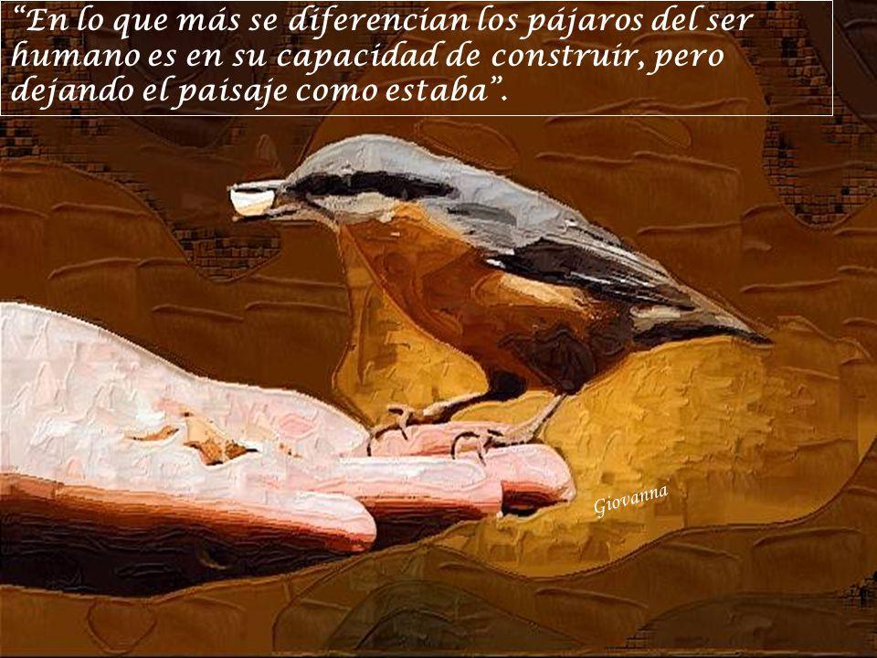Giovanna En lo que más se diferencian los pájaros del ser humano es en su capacidad de construir, pero dejando el paisaje como estaba.