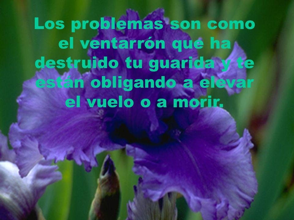 Los problemas son como el ventarrón que ha destruido tu guarida y te están obligando a elevar el vuelo o a morir.