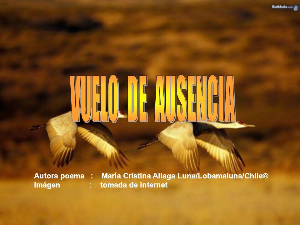 Autora poema : María Cristina Aliaga Luna/Lobamaluna/Chile© Imágen : tomada de internet