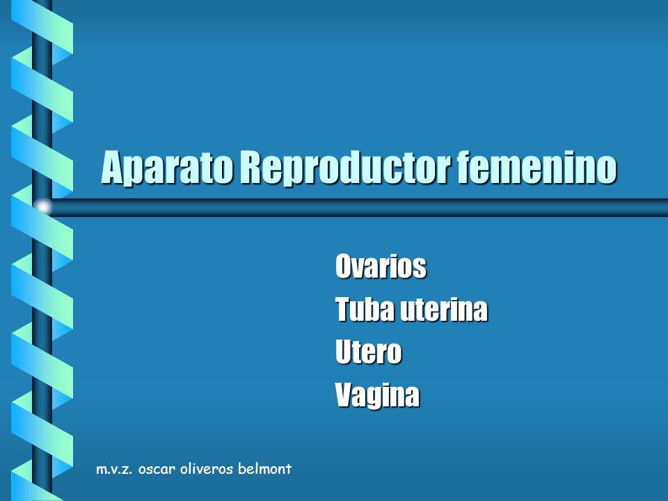 m.v.z. oscar oliveros belmont Aparato Reproductor femenino Ovarios Tuba uterina UteroVagina