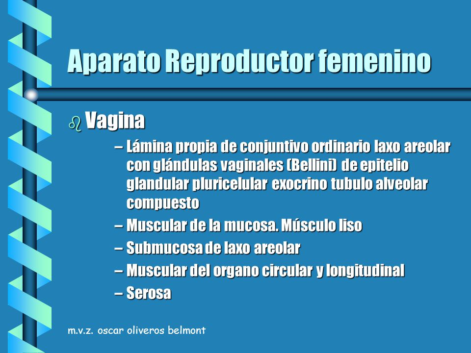 m.v.z. oscar oliveros belmont Aparato Reproductor femenino b Vagina –Lámina propia de conjuntivo ordinario laxo areolar con glándulas vaginales (Belli