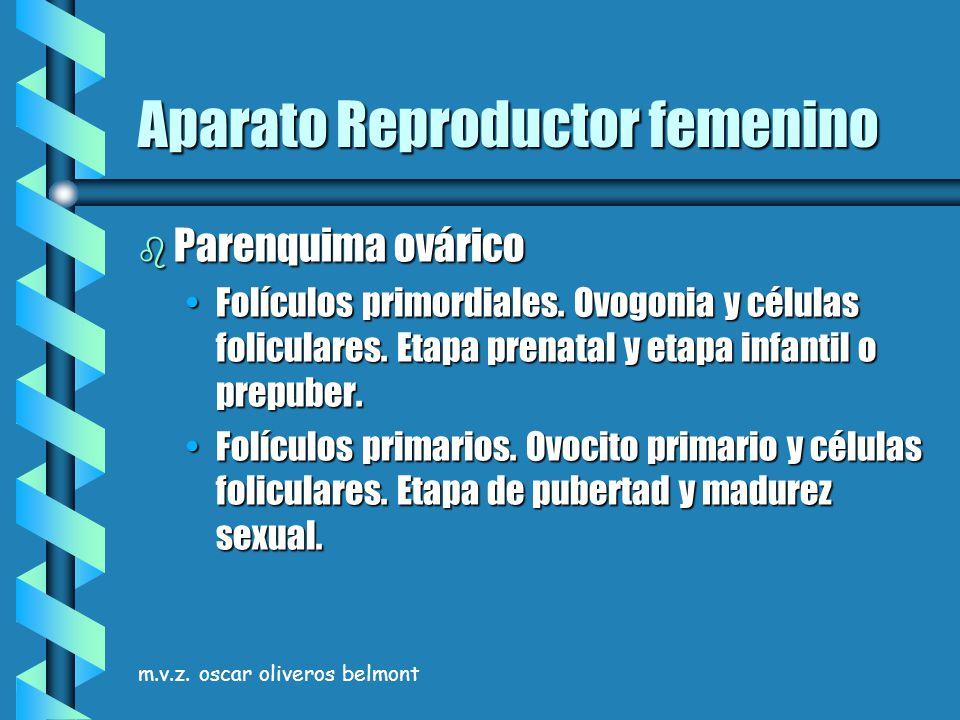m.v.z. oscar oliveros belmont Aparato Reproductor femenino b Parenquima ovárico Folículos primordiales. Ovogonia y células foliculares. Etapa prenatal