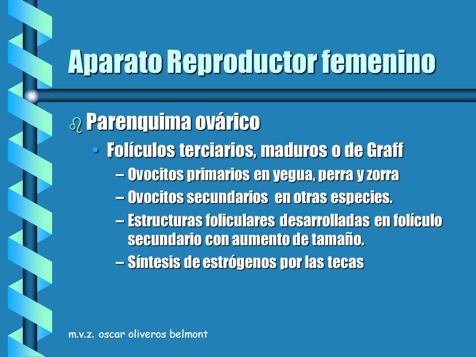 m.v.z. oscar oliveros belmont Aparato Reproductor femenino b Parenquima ovárico Folículos terciarios, maduros o de GraffFolículos terciarios, maduros