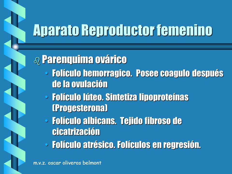 m.v.z. oscar oliveros belmont Aparato Reproductor femenino b Parenquima ovárico Folículo hemorragico. Posee coagulo después de la ovulaciónFolículo he