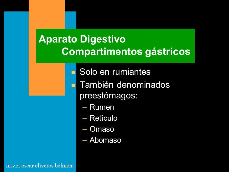 m.v.z. oscar oliveros belmont Aparato Digestivo Compartimentos gástricos n Solo en rumiantes n También denominados preestómagos: –Rumen –Retículo –Oma