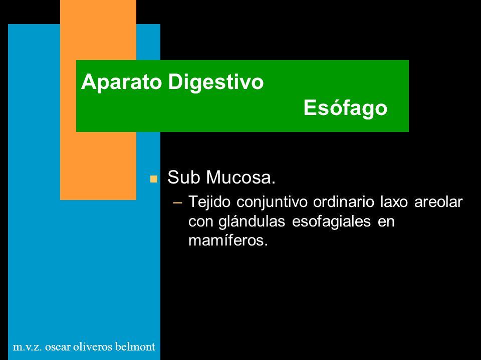 m.v.z. oscar oliveros belmont Aparato Digestivo Esófago n Sub Mucosa. –Tejido conjuntivo ordinario laxo areolar con glándulas esofagiales en mamíferos