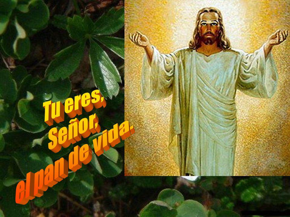 Jesús es el verdadero pan de vida. Automático