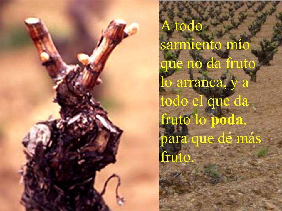 La unión primera y fundamental es vivir en gracia Es como una rama que debe estar unido al tronco.