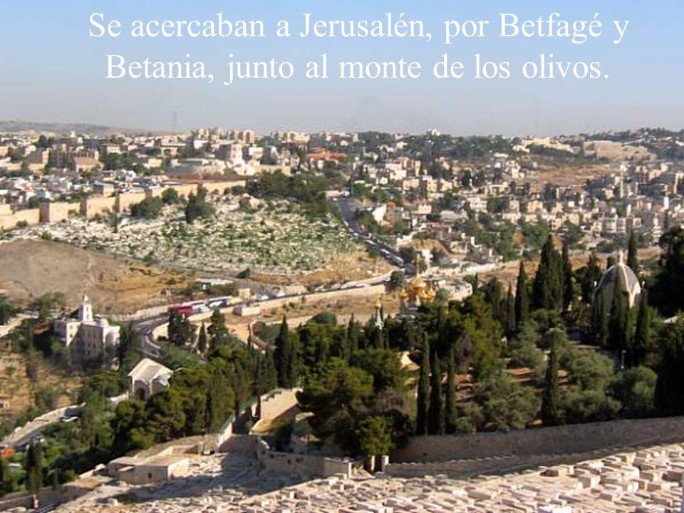 Antes de la procesión se lee el evangelio sobre la entrada de Jesús en Jerusalén. Este año, al ser ciclo B, es del evangelista san Marcos. Mc 11, 1-10
