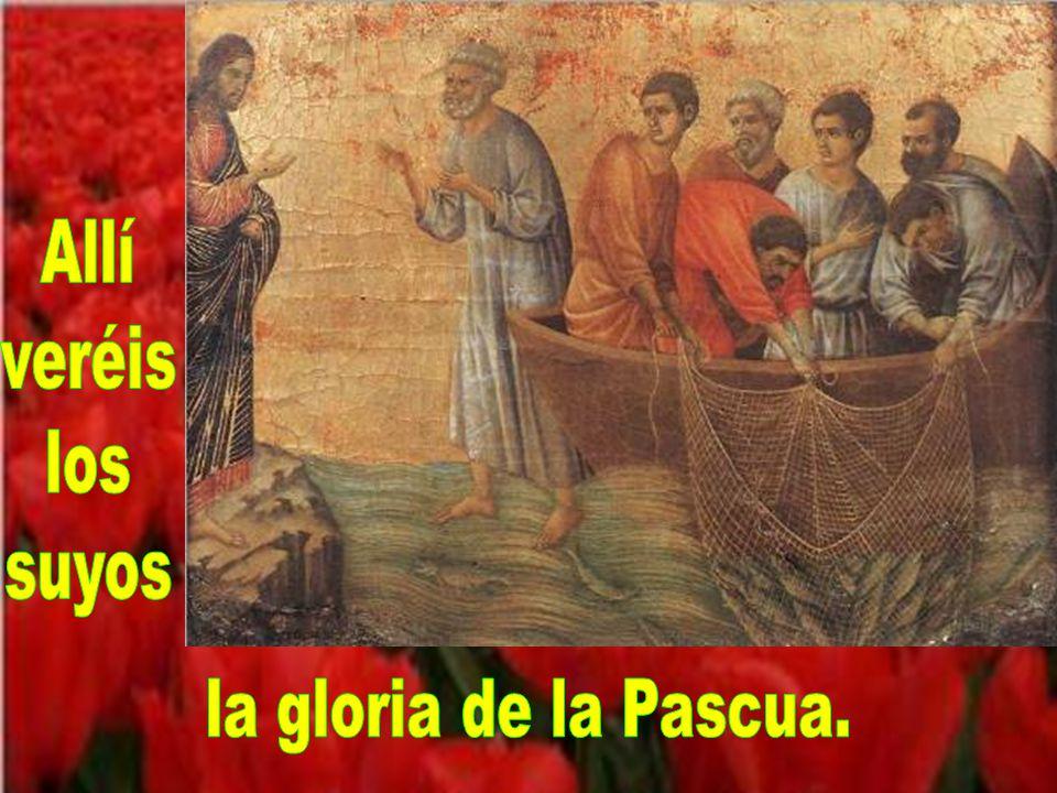Venid a Galilea, Allí el Señor aguarda;